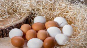 yumurta-besin-değeri-300x166